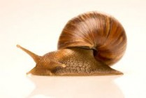 snail